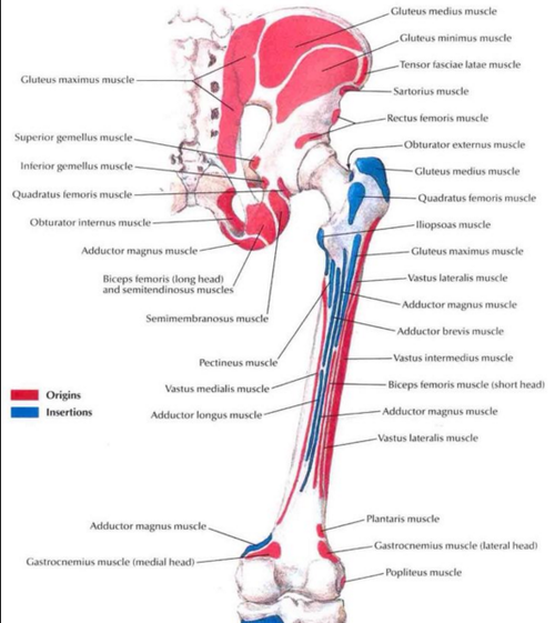 The glutes are in fact great internal hip rotators, too. Open your ...