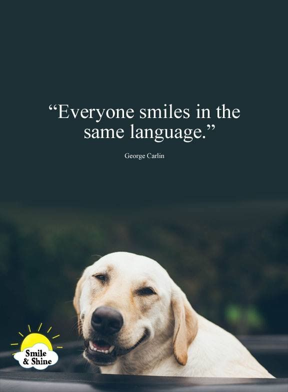 Smiles In Same Language Hund Zitat Hundesprüche Und Hunde