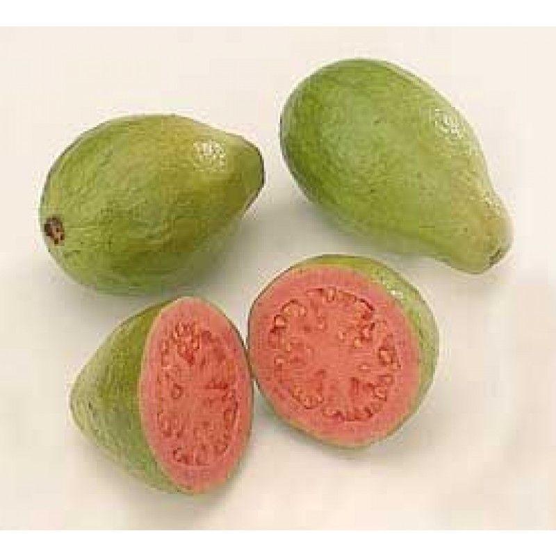 Guayabo rbol origen am rica tropical el fruto se - Arbol de pina ...