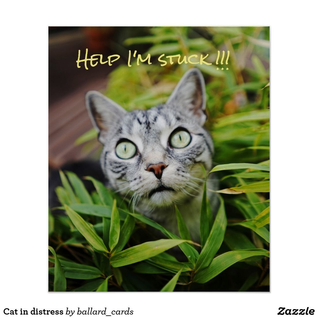 Cat In Distress Poster Cat Posters Cats Cute Dogs