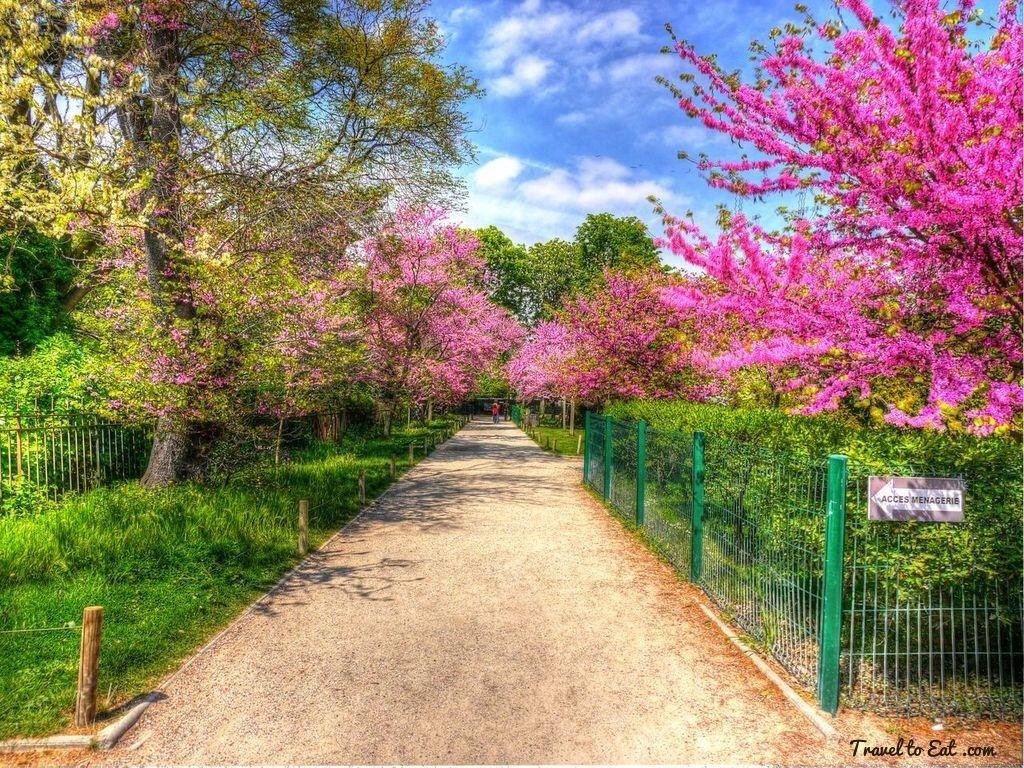 Jardin Des Plantes Paris Judas Tree Paris Paris Travel