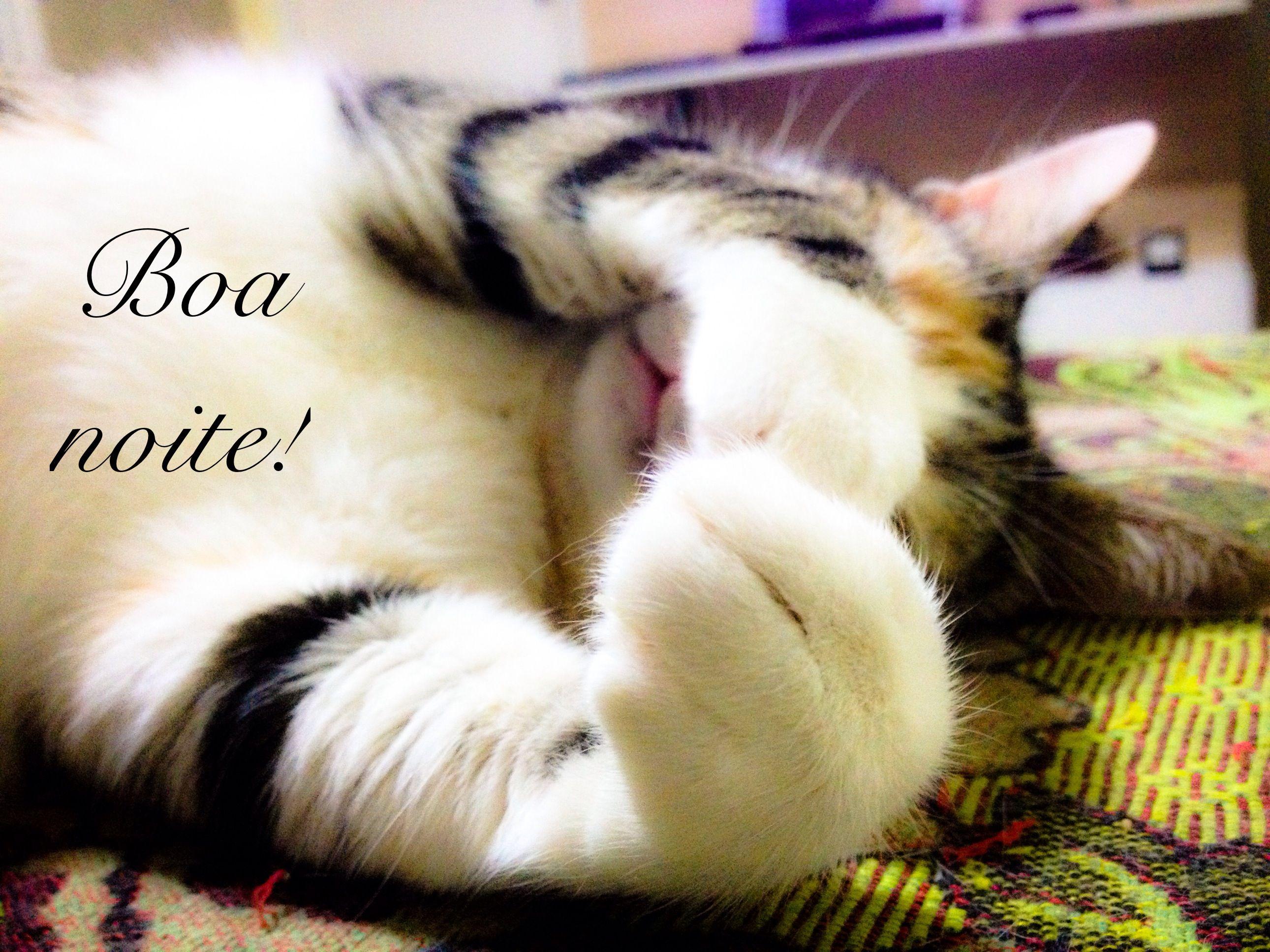 Boa Noite Gatinha Frases Boa Noite Boa E Boa Noite Gato