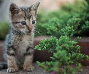 Suara Kucing Lucu Garong Mp3 Download Gratis Bjwt Kucing Kucing Lucu Hewan Peliharaan
