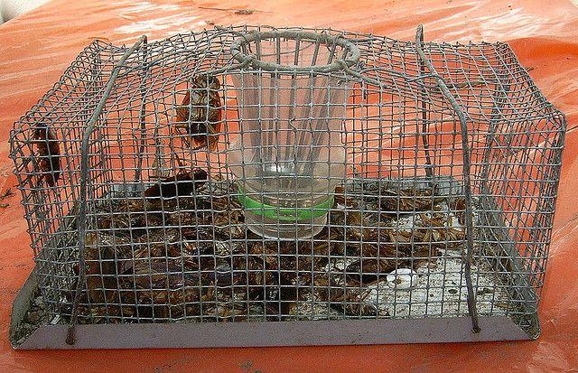 Safe Cockroach Trap Cray Pot Mouse Trap Mouse Traps Cockroaches Traps