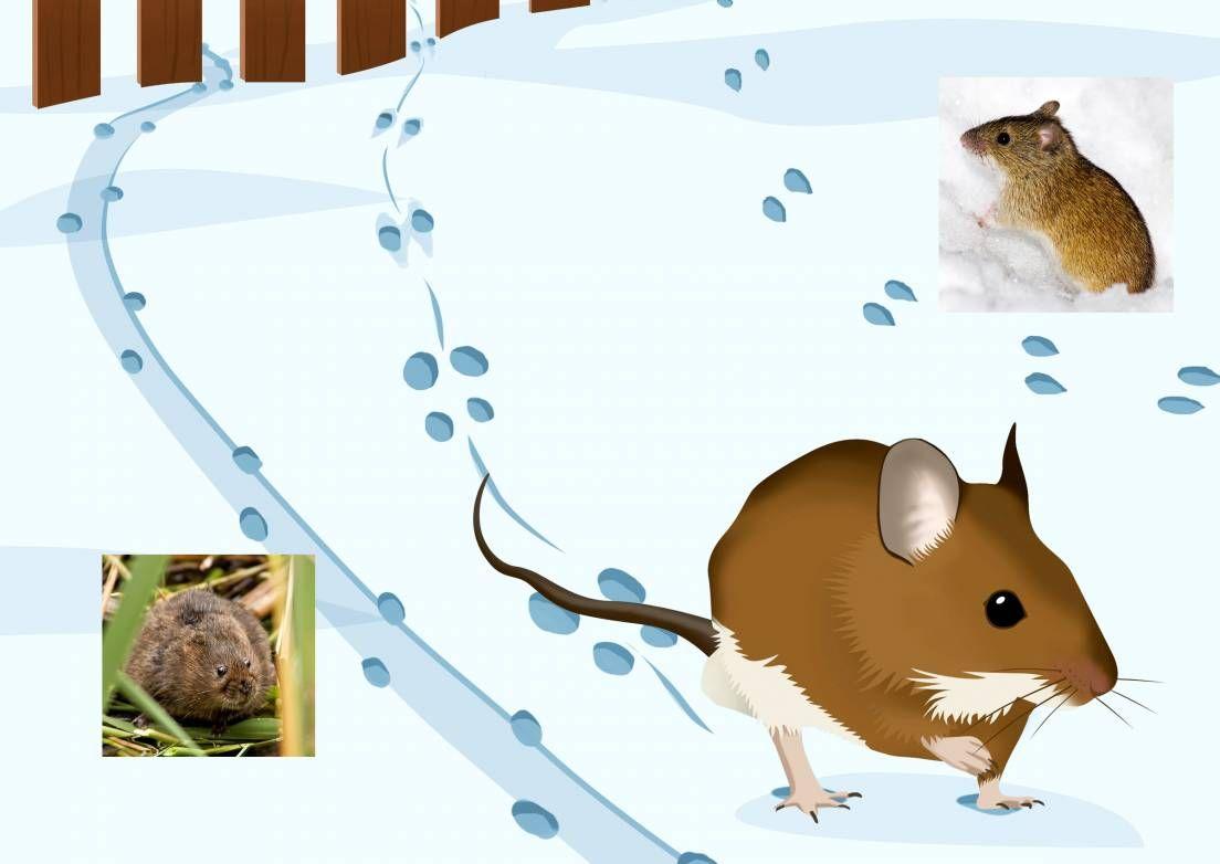 Tunnistatko pihalla vierailleen eläimen jäljet? Katso Meidän talon juttu jäniksen, hiiren ja muiden tuttujen eläinten jäljistä.