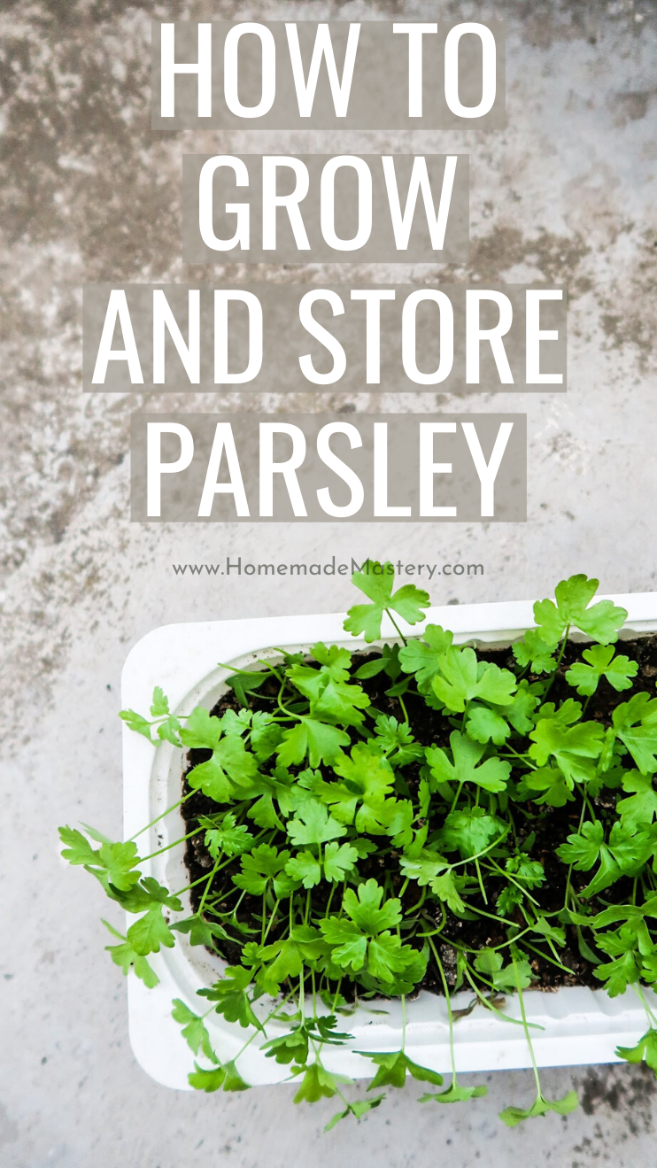 how to grow parsley from seed indoors