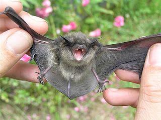 The Bat In My Bathroom Bat Weird Animals Animal Pictures