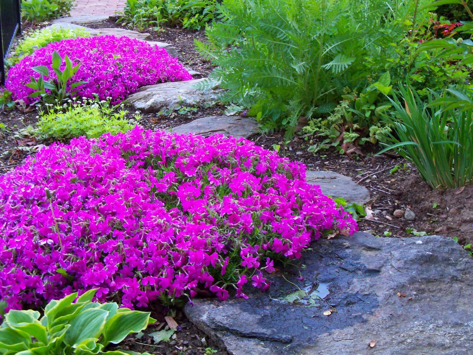 Creeping phlox ground cover...momma used to grow this to