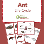 Life Cycle of an Ant and other bugs