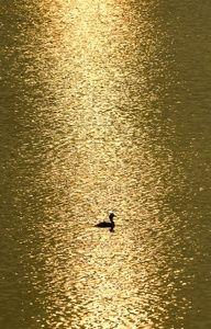 ✿ڿڰۣ(̆̃̃•Aussiegirl  # Gold # Fever.   pure gold