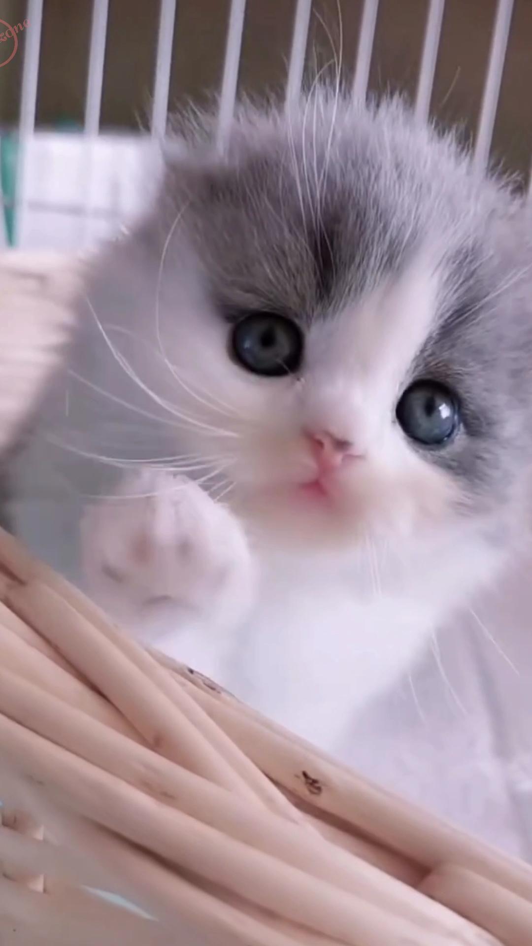 Cute kitten video | Baby cat