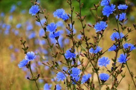 Schmackhaftes aus Feld und Flur: Wildpflanzen im September