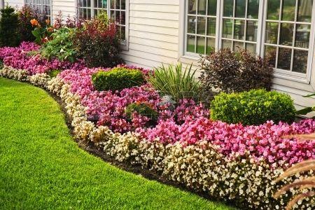Parterre De Flores De Colores Contra La Pared Con Ventanas