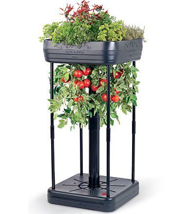 Patio Planter gardening //www.vegetable-garden-guide.com ... on