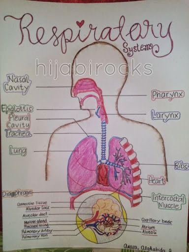 Human Circulatory System Diagram Labeled 1