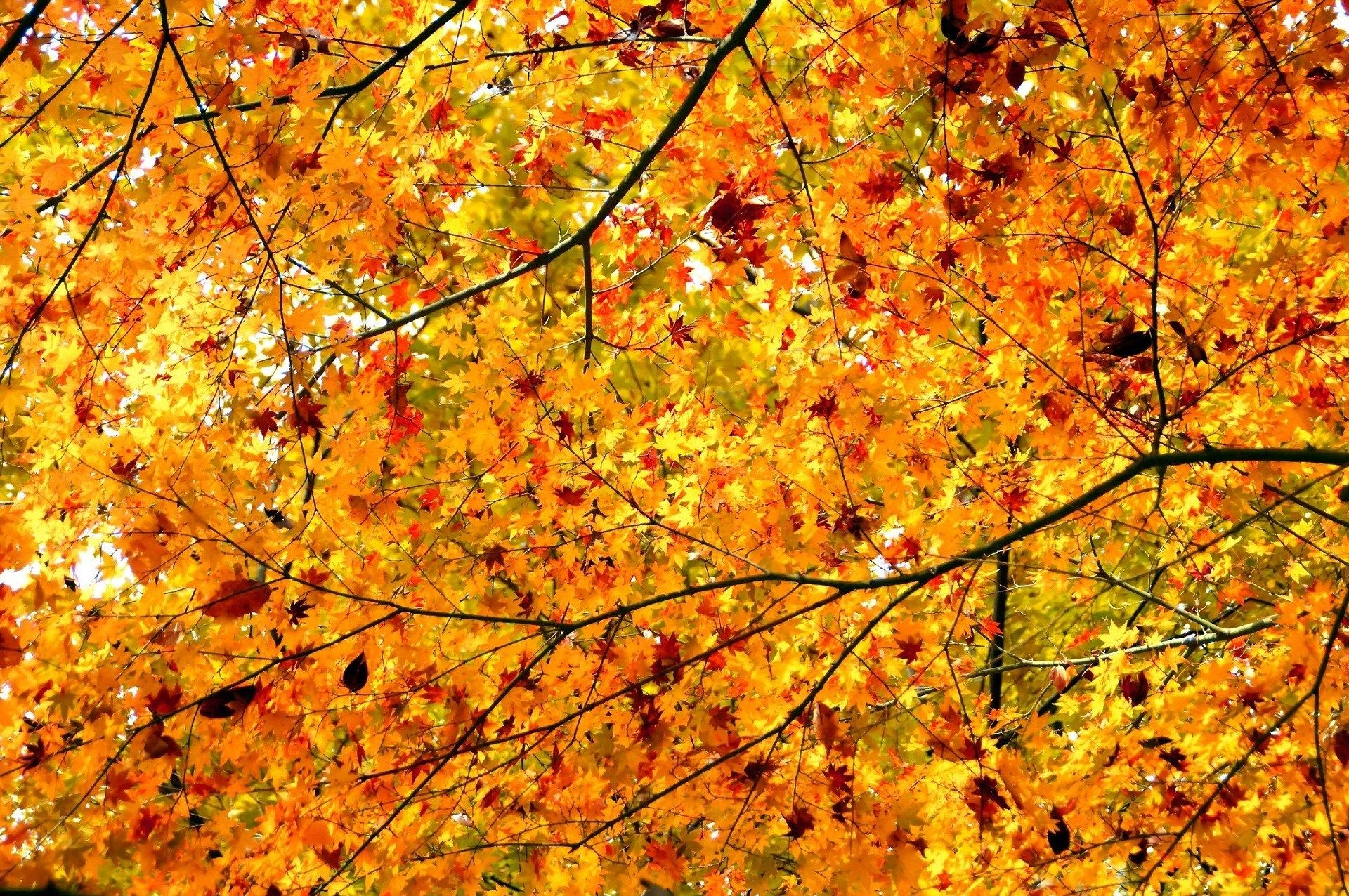 Download Wallpaper Horse Autumn - 3106cba23c259ad9d12ad0be847e6ad8  Picture_135785.jpg