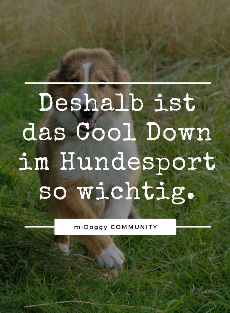 Wirkungsvolles Cool Down Beim Sporthund Midoggy Community Hundesport Hunde Hundchen Training