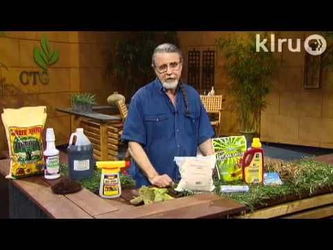 Fire ants, grubs, and chinch bugs|John Dromgoole|Central Texas Gardener