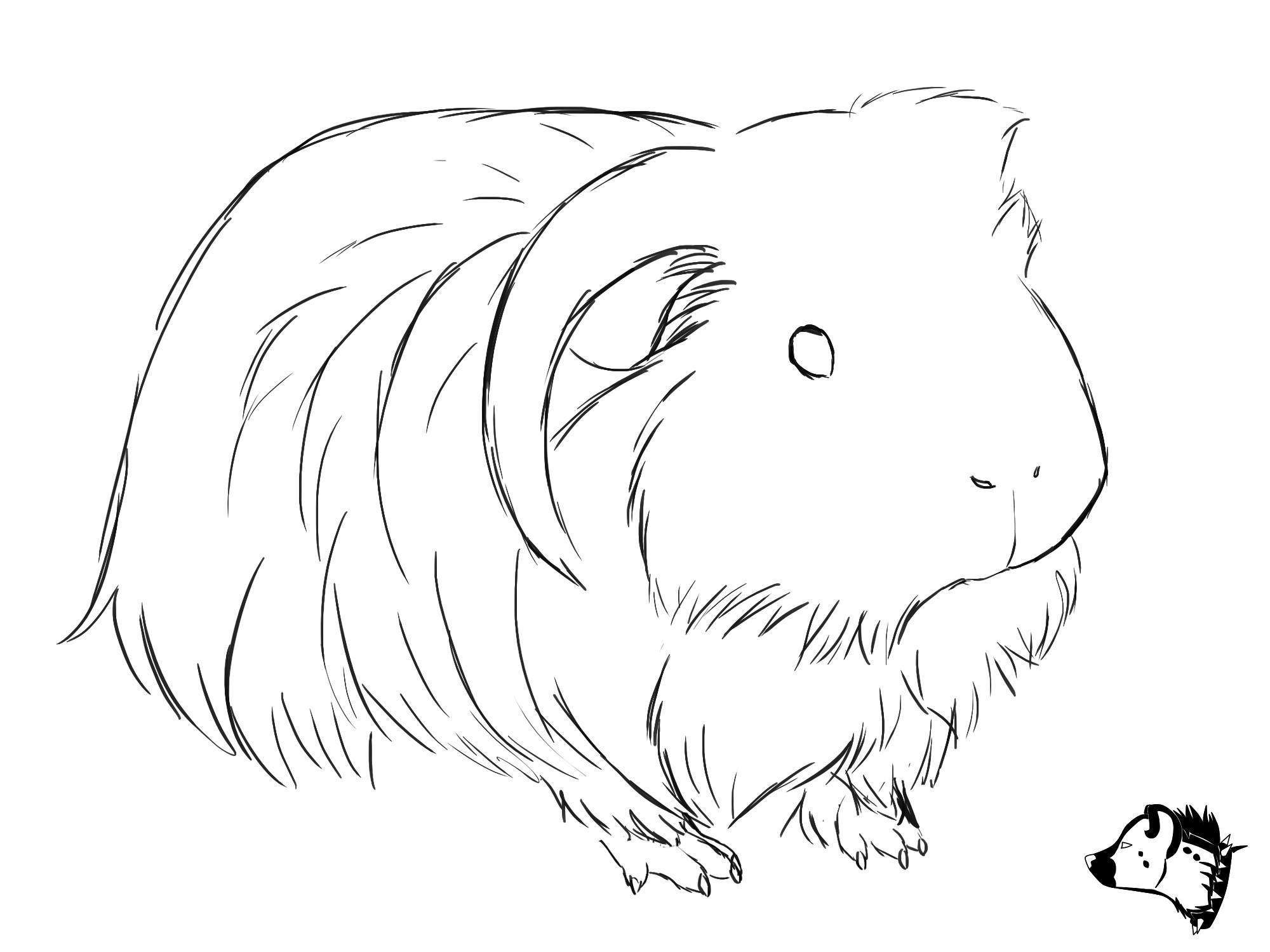 Uncategorized How To Draw A Guinea Pig Step By Step guinea pig drawing google search piggie loving pinterest sketch from guineapig town would make a cute embroidery pattern