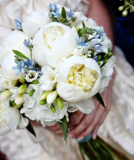 The bridal bouquet will be a loose and open sphere created out of white /cream garden roses and white peonies, with small green accents and light blue forget me not's or tweedia. The bouquet will be finished with a double sided satin ribbon.