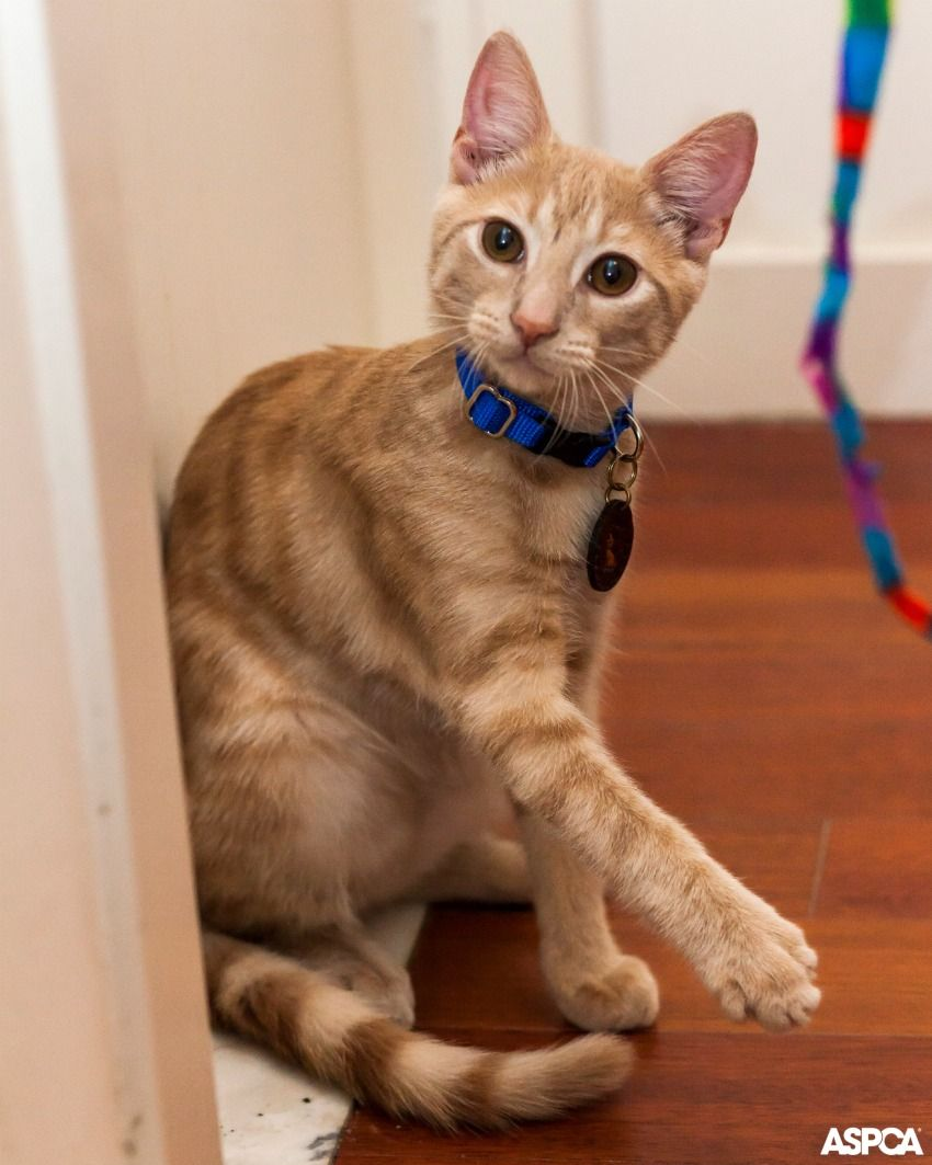 Aspca Happy Tails From Neonate To New Home Aspca Kitten Treats Cute Cats And Kittens