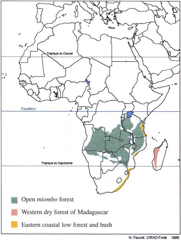 Africa miombo region angola zambia tanzania malawi africa miombo region angola zambia tanzania malawi mozambique zimbabwe gumiabroncs Images