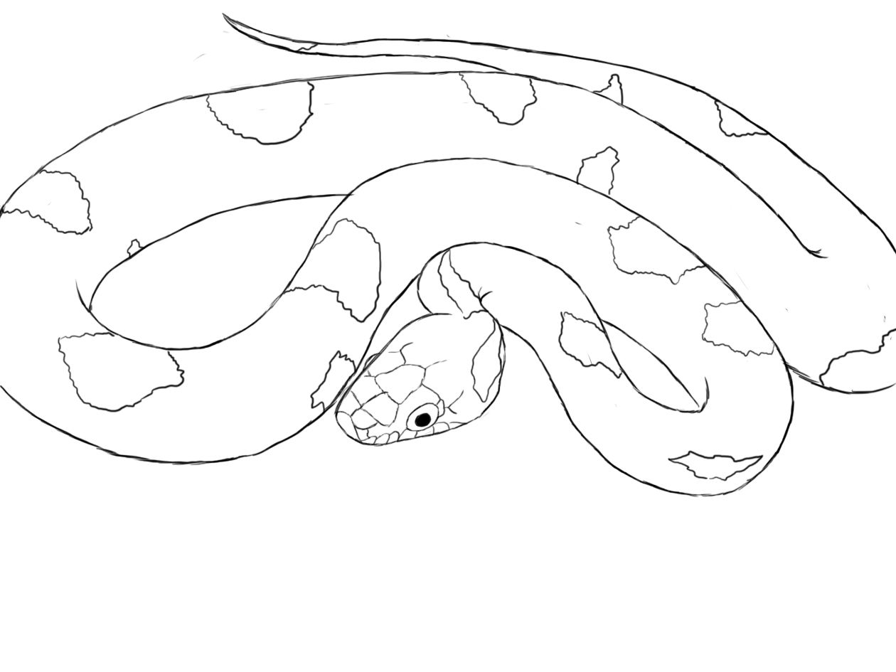 Uncategorized How To Draw A Simple Snake how to draw a snake drawing and animal drawings snake