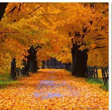 Beautiful season change Autumn landscape, Landscape