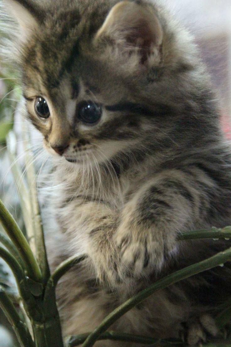 Adorable kitten kittens cutest cute cats beautiful cats