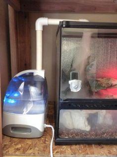 Diy Reptile Fogger Mister Diy Cages Reptile Terrarium