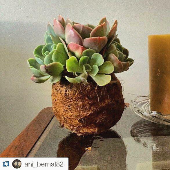 Romina te hace feliz #romimakesyouhappy #kokodamaproject #kokedama #bonsaitree #bonsai #happy #naturedesign #suculenta #succculent
