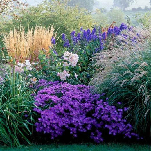 Pin Von Olga Valaskova Auf 0gard Pflanzen Stauden Vorgarten