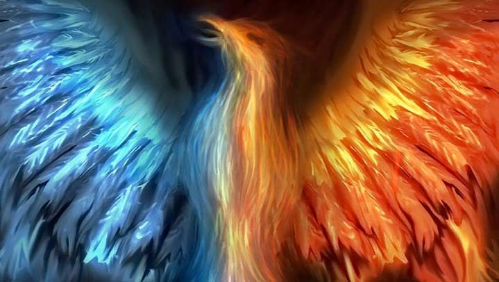 19 facts about the history of phoenix bird in different
