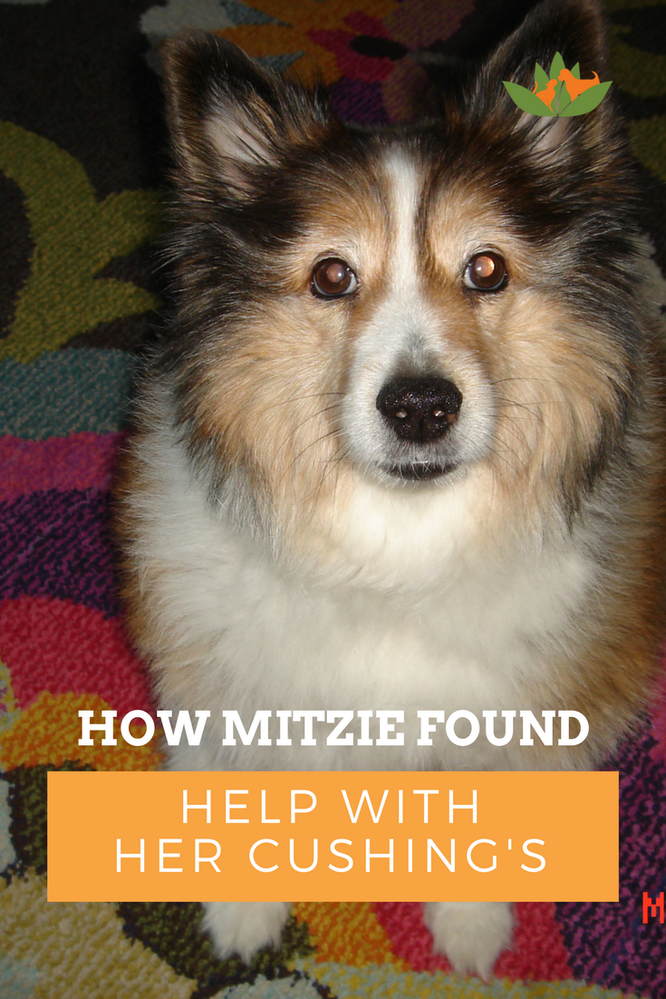 Nhv Cushing S Disease Essential Kit For Dogs Helps Mitzie The