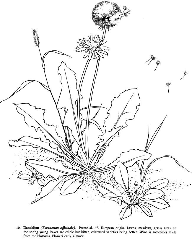 Common Weeds Coloring Book Dover Publications 그림 수채화 그림