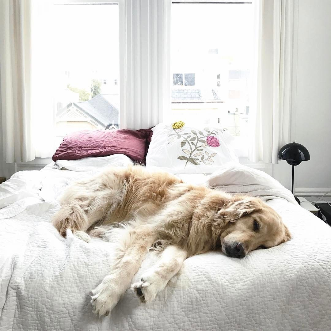 the perfect accessory to any bedroom decor pets dogs cute dogs rh pinterest com