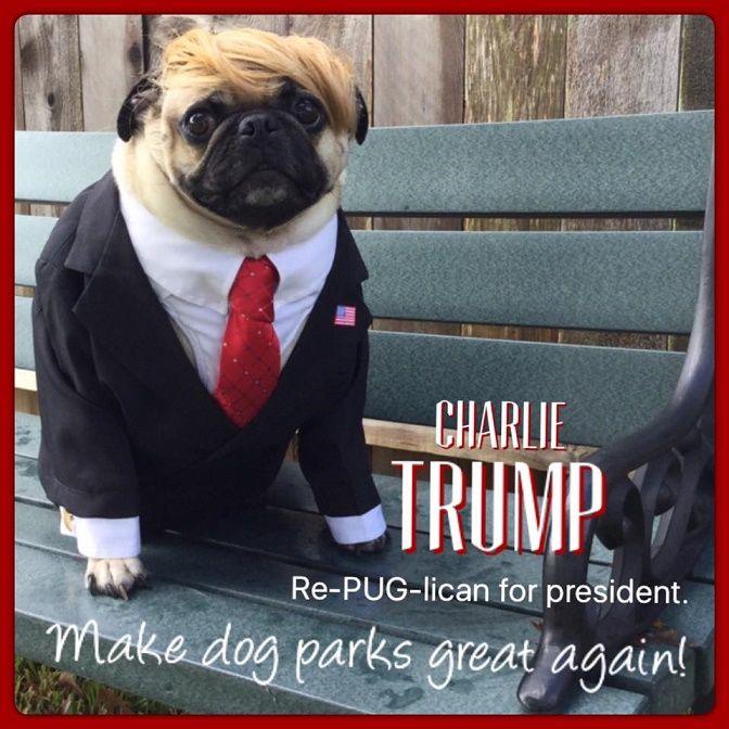 Funny Pug Dog Meme Pun LOL | pug dogs | Pinterest | Meme ...