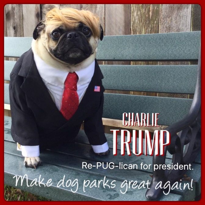 Funny Pug Dog Meme Pun Lol Pugs Funny Funny Dog Memes Pugs