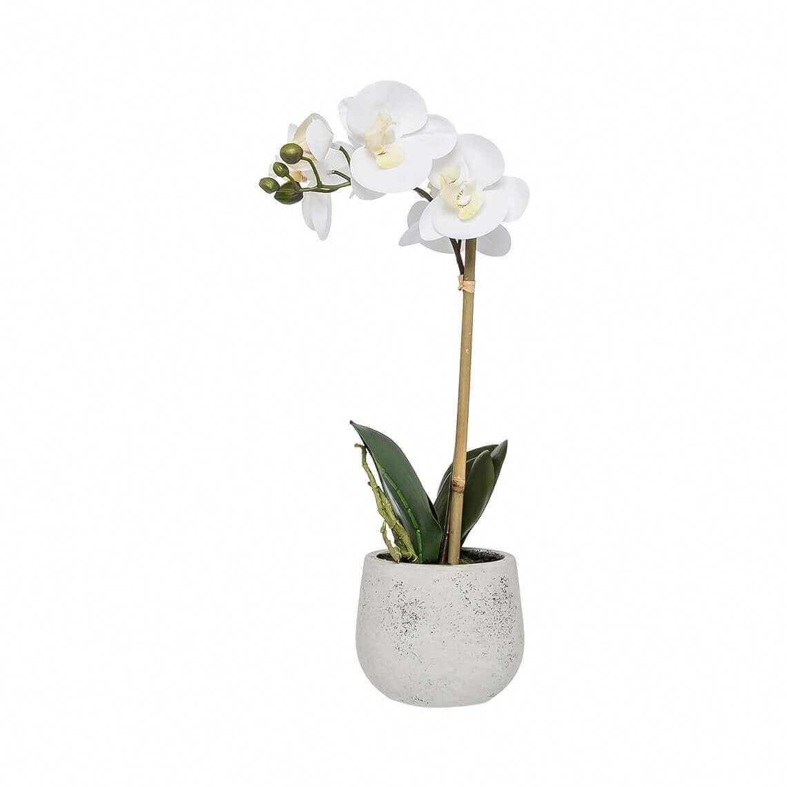 Orchids For Sale Tesco Orchids Beautiful Orchids Orchids Orchid Care