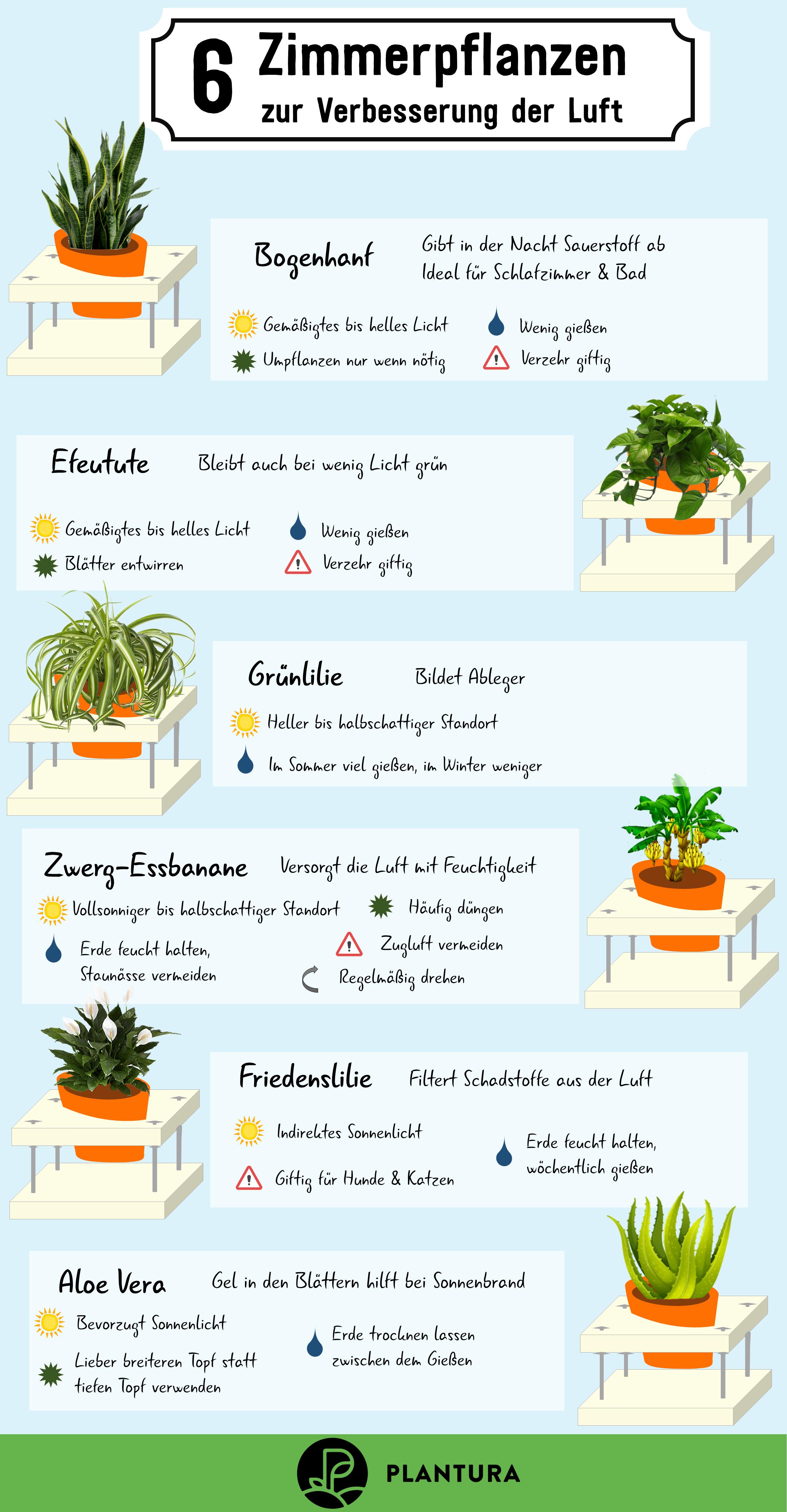 Luftreinigende Pflanzen: Die Top 17 - Plantura  Zimmerpflanzen