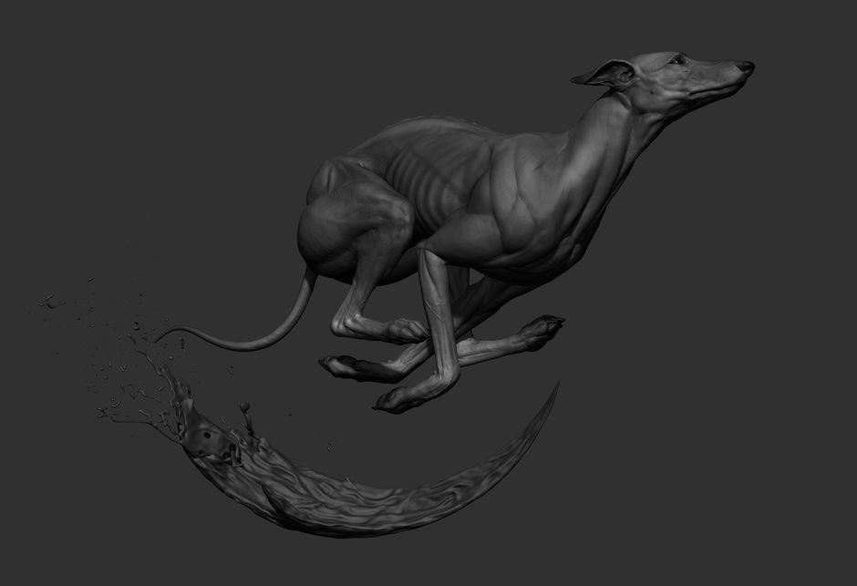 Greyhound By Krystal Sae Eua Creatures 3d Cgsociety Cgs