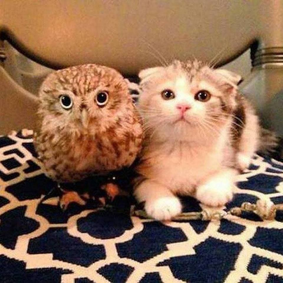 Pin By Eliza Marsden On Cats With Other Animals Cute Animals Cute Cats Cute Creatures
