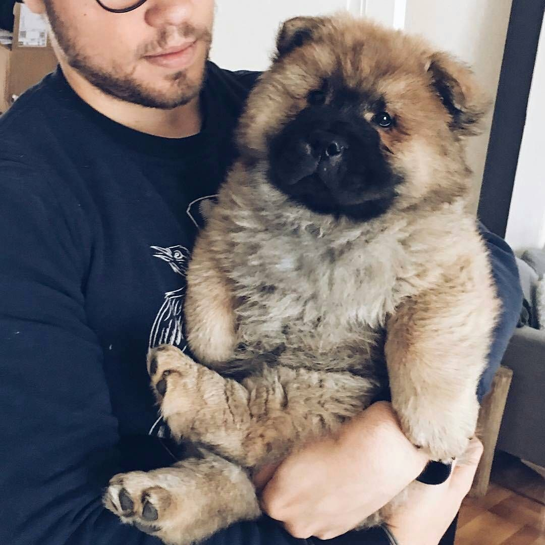 7 417 Likes 62 Comments Chowstagram Chow Chow Puppies