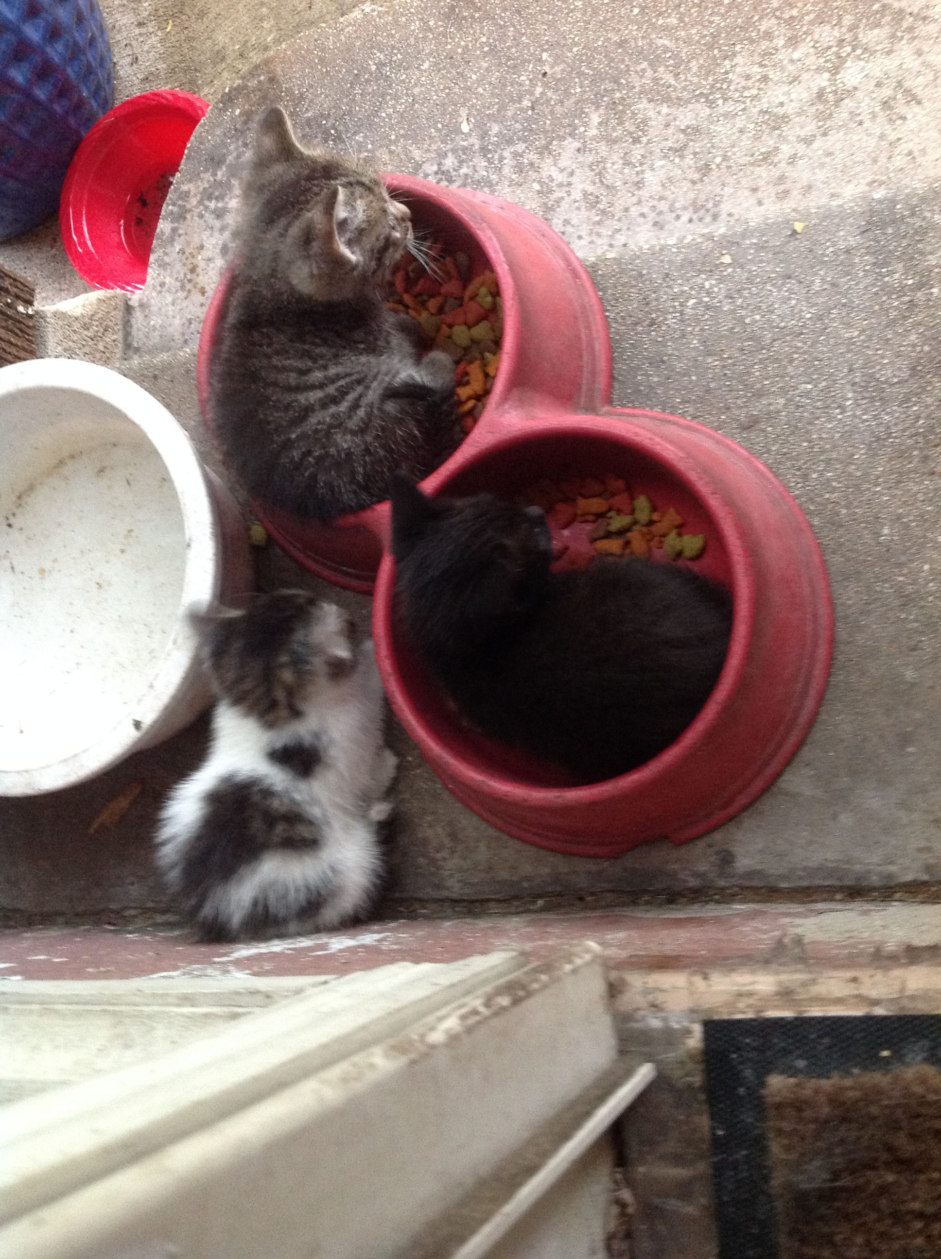 cat eating dog food video