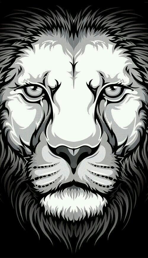 León blanco y negro   lion   Pinterest   León, Negro y Blanco
