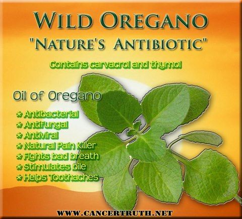Oil of oregano is an awesome natural antiviral, antibacteria and antifungal and contains 2 key compounds...carvacrol and thymol. Studies have shown these compounds have significant effects on micro-organisms that cause illness. It is also an effective pain killer. An article published in Phytotherapy Research describes how oil of oregano surpassed anti-inflammatory drugs in reversing pain and inflammation and is nearly as powerful as morphine.visit www.kthompson@vibrant scents.com