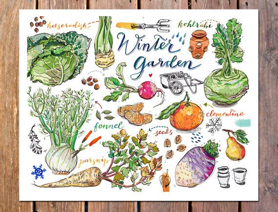 Winter Garden Print. Vegetables. Gardening. Food Art. By LouPaper
