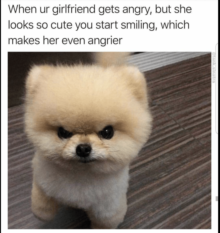 42 Hilarious Animal Memes That Are So Cute You Re Gonna Die Funny Animal Memes Angry Dog Animal Memes