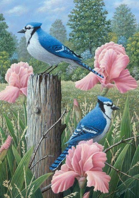 Pin By Grietje Aant On Vogels Birds Painting Bird Art Art