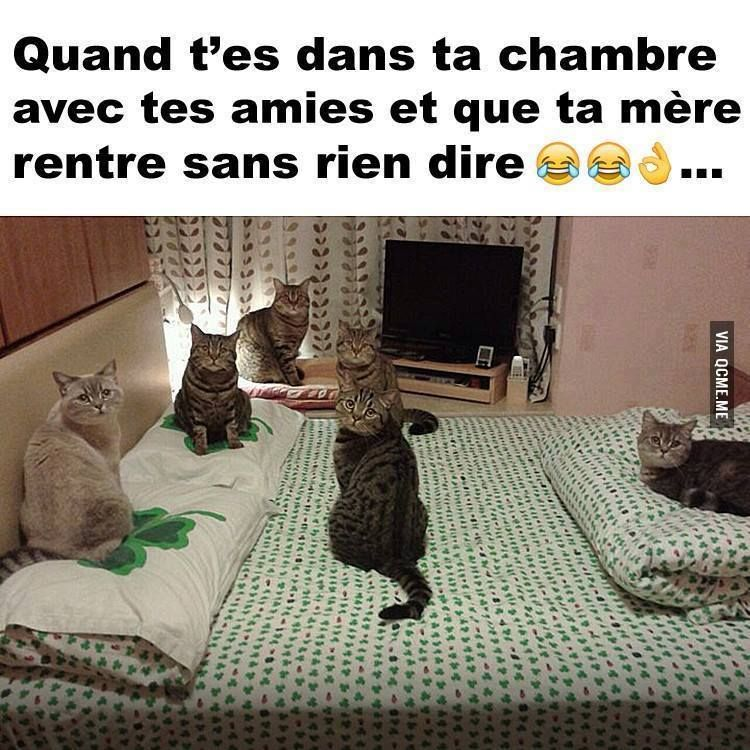 trop chou humour pinterest chou dr le et chats. Black Bedroom Furniture Sets. Home Design Ideas